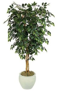 5' Ficus Tree - Natural Trunks - 1,140 Leaves - Green