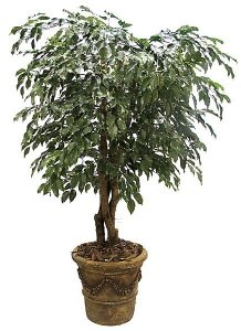 5' Ficus Tree - Natural Trunks - 2,352 Leaves - Green- Custom Made