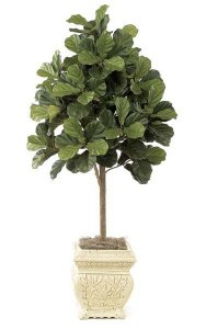 5' Fiddle Leaf Fig Tree - Natural Trunk - 168 Leaves