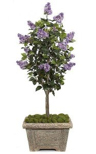5' Lilac Tree - Natural Trunk - 15 Purple Flower Clusters