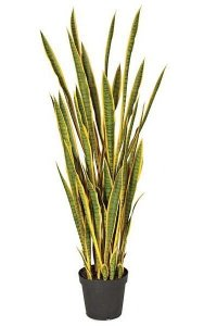 5' Plastic Sansevieria Plant - 50 Green/Yellow Leaves