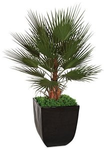 5' Plastic Washingtonia Palm Tree - Natural Boot Trunk - 17 Green Fronds