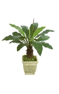 "51"" Anthurium Plant - Synthetic Trunk - 2 Purple/Brown Buds"