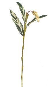 "24"" Ginger Flower Stem - Soft Touch - 3 Leaves - 1 Flower - Beauty"