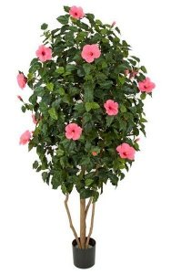 5.5' Hibiscus Tree - Natural Trunk - Hot Pink Flowers
