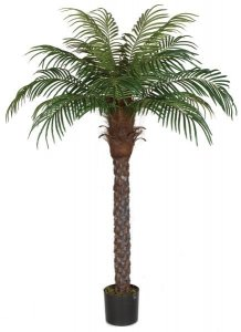 6' Date Palm Tree - Synthetic Trunk - 720 Leaves - 16 Fronds