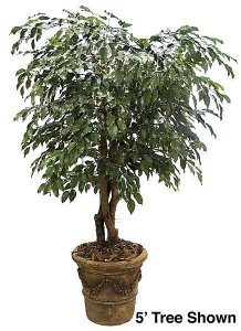 6' Ficus Tree - Natural Trunks - 2,058 Leaves - Green- Custom Made