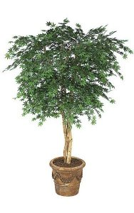 6' Japanese Maple Tree - Natural Trunks - 1,944 Leaves