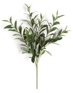 Earthflora's 23 Inch Ifr Olive Branch (Sold By The Branch)