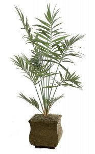 6.5' Kentia Palm Tree - 10 Fronds - Green