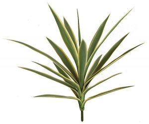 Earthflora's 26 Inch Uv Yucca Plant - Burgundy Or Green/yellow