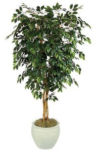 7' Ficus Tree - Natural Trunks - 1,824 Leaves - Green