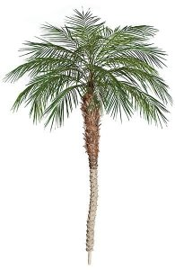 8' Phoenix Palm Tree - Synthetic Trunk - Bare Stem