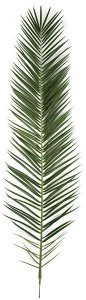 "87.5"" Phoenix Palm Frond - 126 Tutone Green Leaves - FIRE RETARDANT"