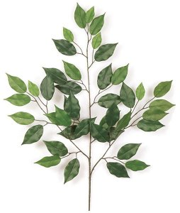 Earthflora's 24 Inch Ficus Branch (Sold By The Dozen)