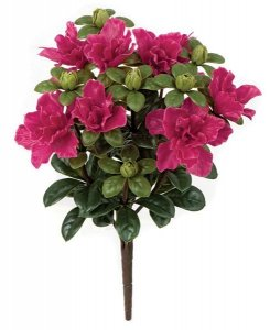 Earthflora's 14 Inch Outdoor Azalea Bush - Beauty, Pink, White