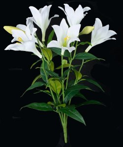 Earthflora's 24 Inch Easter Lily Bush