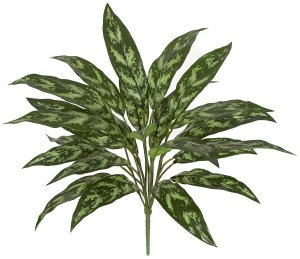 Earthflora's 28 Inch Soft Touch Aglaonema (Silver King) Bush