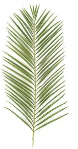 Earthflora's 46 Inch Areca Palm Branch