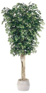 12' Ficus Tree - Natural Trunks - 5,472 Leaves - Green
