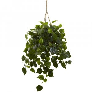 Philodendron Hanging Basket UV Resistant