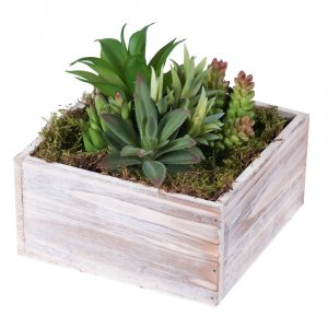 "5"" x 9"" Potted Succulents in Silver Pot - Assorted Green"