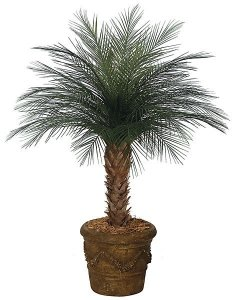 A-0055 CUSTOM MADE  4'-7' Tall Areca Palm for Outdoor Use