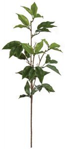 "20"" Ficus Spray - Green"