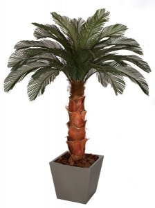 6' Cycas Palm Tree - Natural Boot Trunk - 24 Fronds - Bare Trunk