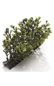 "5"" Boxwood Edge - 36 Leaves - Traditional Leaf - Tutone Green"