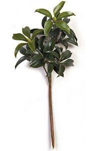19 Inch Mountain Laurel Branch - 9 Leaf Clusters - Green