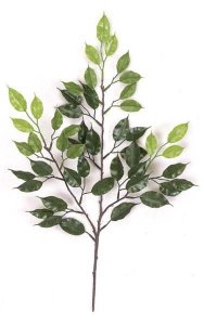 24'' Outdoor Ficus Branch - 49 Leaves - Tutone Green