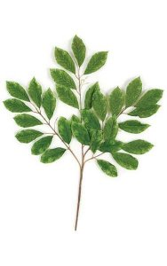 "26"" Cherry Leaf Branch - 31 Leaves - Green"