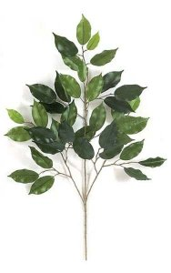 "25"" Ficus Branch - 38 Leaves - Green-sold by dozen"