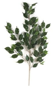 "41"" Ficus Branch - 101 Leaves - Green"