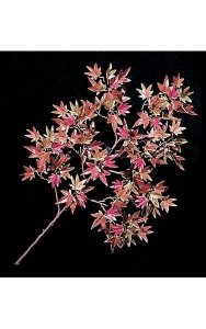 "25"" Mini Japanese Maple Branch - 106 Leaves - Red/Brown"