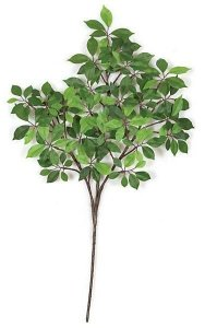 "24"" Ming Ficus Branch - 175 Leaves - Green (sold by the dozen)"