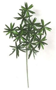 Earthflora's 24 Inch Podocarpus Branch (Sold By The Dozen)
