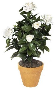 "19"" Gardenia Bush - 43 Leaves - 5 Flowers - 3 Buds - White"