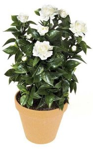 "24"" Gardenia Bush - 107 Leaves - 6 Flowers - 4 Buds - White"