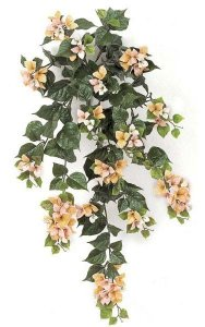 "36"" Bougainvillea Bush- 18 Flower Clusters - Peach/Pink/Cream"