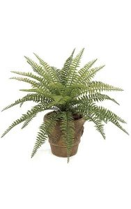 "23"" Small Boston Fern - 29 Fronds - 30"" Width - Green - Bare Stem"