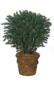 "37"" Outdoor Taxus Yew - 564 Leaves - 30"" Width - Green - Bare Stem"