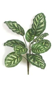 "22"" Calathea Roseopicta Bush - Outdoor Plastic Coated - 10 Variegated Green Leaves - 20"" Width"