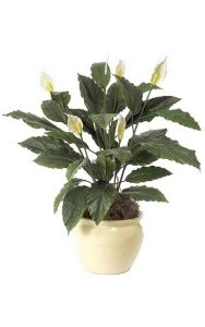 "34"" Spathiphyllum Bush - Soft Touch - 29 Green Leaves - 5 Cream/Yellow Flowers - 2 Buds - Bare Stem"