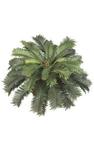 "Sago Palm Bush - 39 Fronds - 26"" Width - Green with Brown Cone - Bare Stem"
