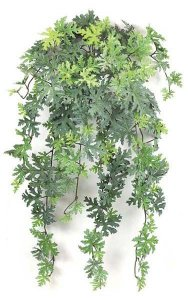 "30"" Citronella Bush - 173 Leaves - Frosted Green"