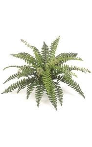 "Fishtail Fern - 30 Fronds - 31"" Width - Green - Bare Stem"
