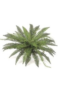 "Fishtail Fern - 50 Fronds - 39"" Width - Green - Bare Stem"