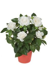 "16"" Gardenia - 112 Leaves - 8 Flowers - 3 Buds - Cream - Plastic Pot"